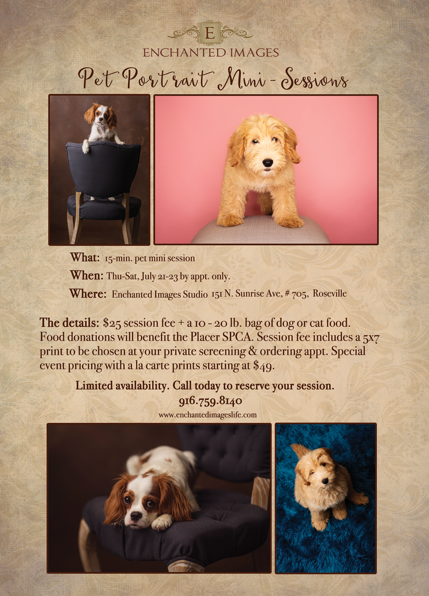Roseville pet photographer